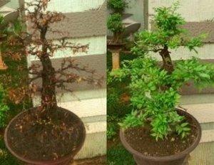 kesalahan dalam menanam tanaman hias