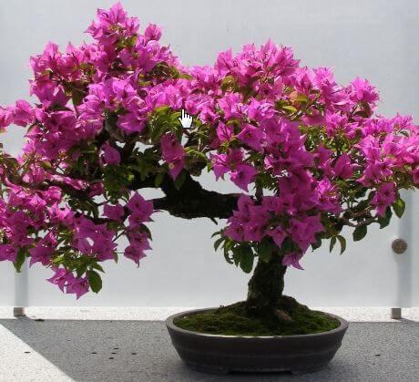 Tanaman obat yang di manfaatkan bunganya