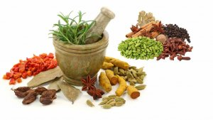 tanaman obat hortikultura