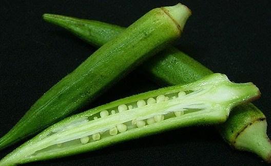 tanaman okra